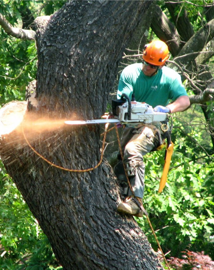 tree removal wollongong