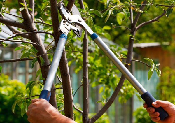 tree trimmers wollongong