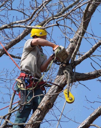 tree pruning wollongong